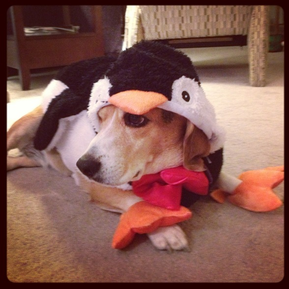 Penguin/Beagle