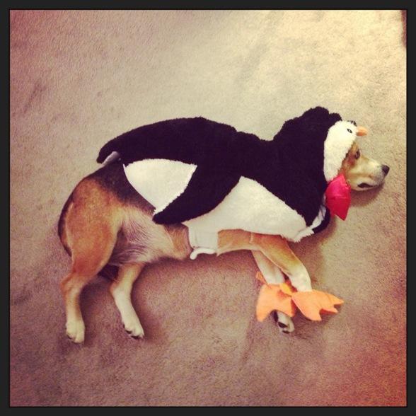 Poor Penguin